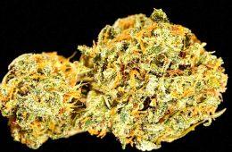 addiction recovery ebulletin stronger cannabis
