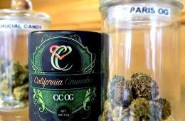 addiction recovery trump allows legal marijuana