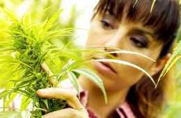 addiction recovery ebulletin cannabis addiction women