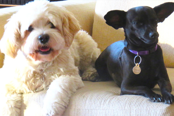addiction recovery ebulletin dogs help addicts 2