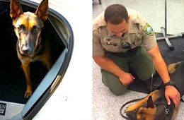 addiction recovery ebulletin police dog given narcan