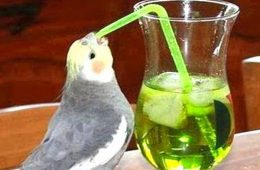 addiction recovery ebulletin more birds getting drunk