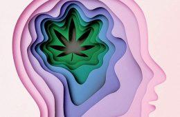 addiction recovery ebulletin marijuana safe as we think