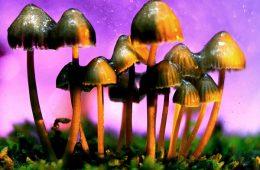 addiction recovery ebulletin legalize magic mushrooms