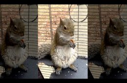 addiction recovery ebulletin meth squirrel2