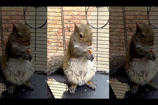 addiction recovery ebulletin meth squirrel2