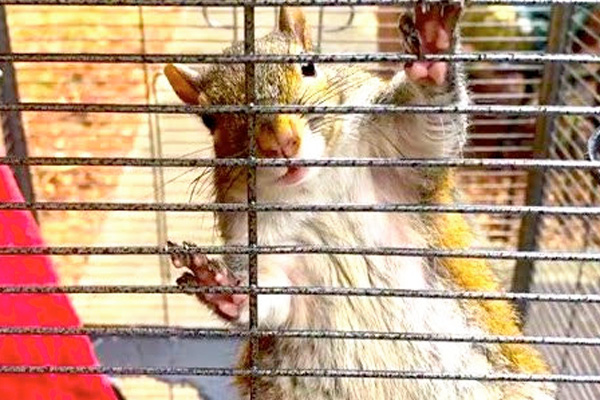 addiction recovery ebulletin meth to squirrel
