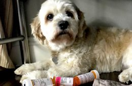 addiction recovery ebulletin stress on pets