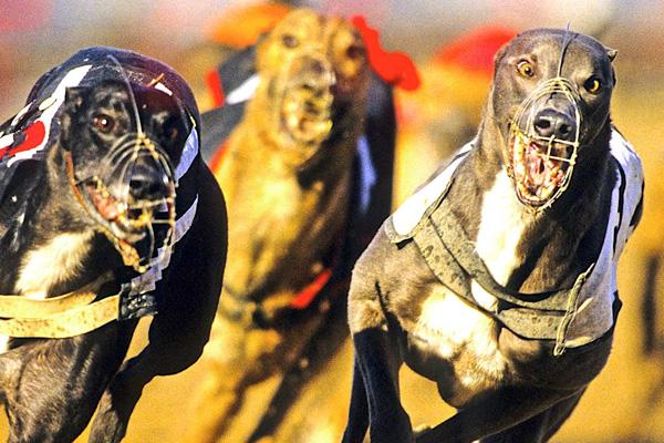 addiction recovery ebulletin greyhounds cocaine