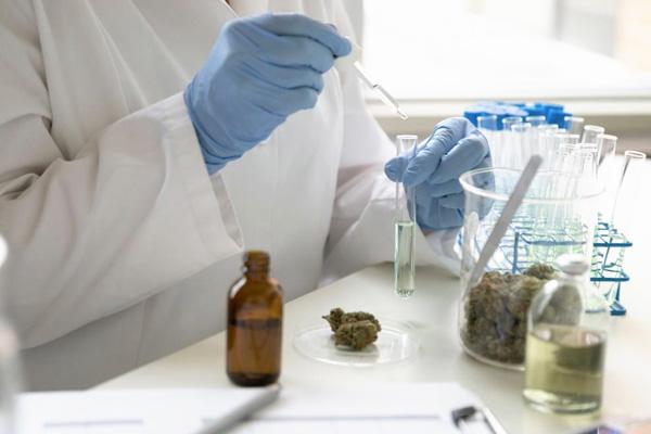 addiction recovery ebulletin pot doctors ignorant