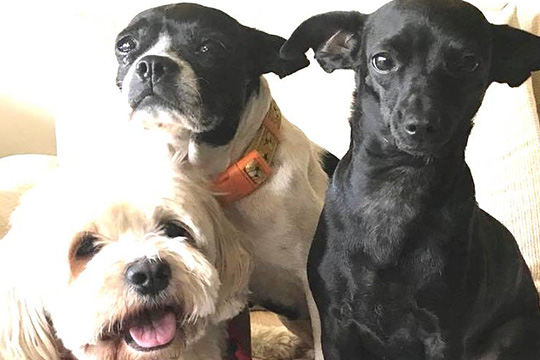 addiction recovery ebulletin yelling at dogs
