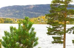 addiction recovery ebulletin free treatment norway