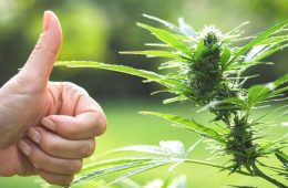 addiction recovery ebulletin Coronavirus marijuana