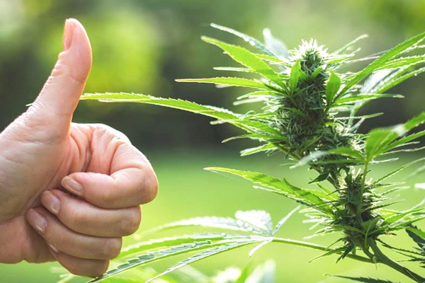 addiction recovery ebulletin Coronavirus marijuana