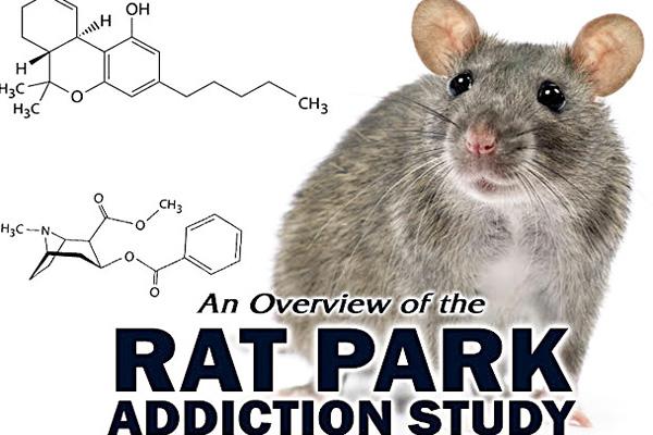 addiction recovery ebulletin rat park film