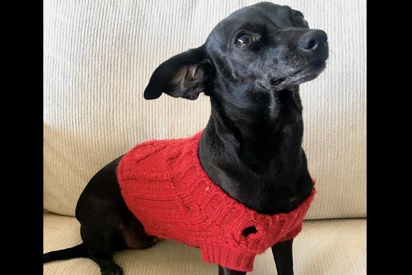 addiction recovery ebulletin Pet Friendly Rehab 2