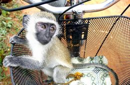 addiction recovery ebulletin monkey experiments